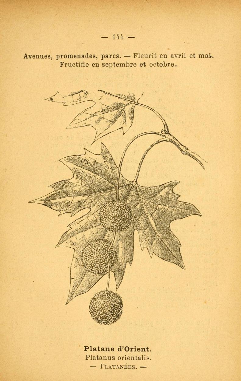 Atlas_de_poche_des_plantes_des_champs,_des_prairies_et_des_bois_(Page_144)_(6022048467)